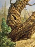 Из корня. Мамврийский Дуб. (2014 г) 80х60 (холст, масло)